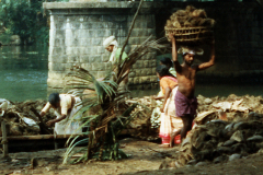 India-12_web